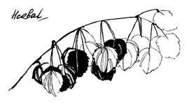 Ręka rysuje botanicznego pędnego element Obraz Royalty Free