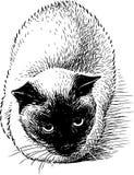 Ręka rysunek siamese kot royalty ilustracja