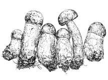 Ręka rysunku stylu ilustracja brown nakrętek boletusmushrooms Fotografia Stock