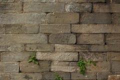 Ręka Rzeźbiąca Brogująca Kamienna tekstura Obraz Stock