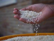 ręka stawia ryż Zdjęcia Stock