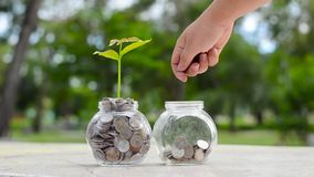 Ręka Stawiający pieniądze butelki banknotów drzewny wizerunek banknot z rośliny dorośnięciem na wierzchołku dla biznes zieleni na zdjęcie wideo