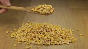 Ręka szybko nalewa kukurydzane adra od drewnianej łyżki na stosie kukurudza zbiory