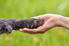 Ręka trzyma łapę pies fotografia stock