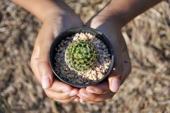 Ręka trzyma małego kaktusowego garnek zdjęcia stock