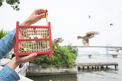 Ręka trzyma ptasią klatkę dla wyzwolenia obrazy stock