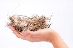Ręka trzyma ptasiego gniazdeczko na białym tle Fotografia Stock