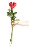 Ręka trzyma trzy róży Obraz Stock