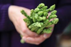 Ręka trzyma wiązkę zielony asparagus Fotografia Royalty Free
