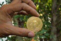 Ręka Trzyma Złotego Bitcoin drzewa tło zdjęcia stock