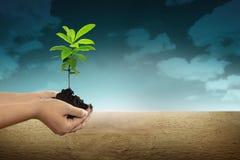 Ręka trzyma zielonej rośliny zdjęcia stock