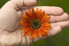 ręka trzymająca kwiat obrazy stock