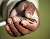 ręka wąż zdjęcie stock