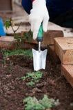 Ręka w rękawiczce używać ogrodową kielnię Zdjęcie Royalty Free