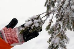 Ręka w trykotowej rękawiczce trzyma gałąź jodła zakrywający śnieg zdjęcie stock