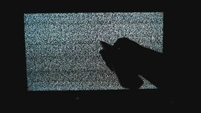 Ręka wyłacza styl życia kanały żadny mężczyzny hałasu tv tło Telewizja ekran z statycznym hałasem powodować złym sygnałem zdjęcie wideo
