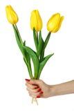 Ręka z żółtymi tulipanami Fotografia Royalty Free