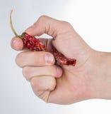 Ręka z chili Fotografia Stock