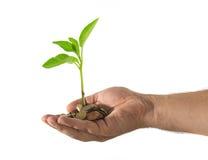 Ręka z monetami i zieloną rośliną obrazy royalty free