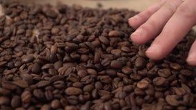 Ręka z pierścionkiem na twój palcowych sunięciach gładzi za strony kawowej fasoli zbiory