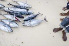 Ręka z tuńczyka chwyta Zdjęcia Stock