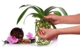 Ręka z ziemi i orchidei kwiatami obraz royalty free