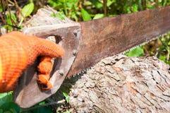 Ręka zobaczył cięcia gęsty drzewny bagażnik zdjęcie stock