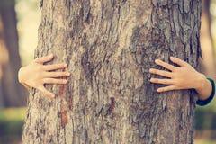 Ręki ściska drzewa Fotografia Royalty Free