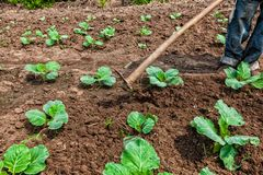Ręki Afrykański wiejski rolnik z uprawiać ziemię narzędzie, orze ziemię Obrazy Stock