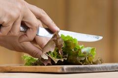 Ręki ciie zielonej sałaty Zdjęcia Stock