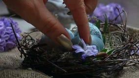 Ręki dekorują wielkanocy gniazdeczko hiacyntowy kwiat zbiory wideo