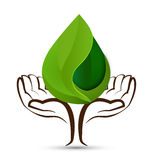 Ręki drzewa woda opuszcza liścia kształta loga Obrazy Stock