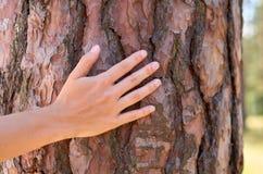 Ręki dziewczyna ściska drzewa w lesie lub parku pojęcie jedność z naturą Obrazy Royalty Free