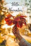Ręki dziewczyna trzyma bluszcza liść drzewny w jesieni słońcu jesieni żółty pogodny tło Inskrypcja Listopad Cześć obraz royalty free