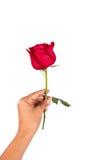 Ręki dziewczyny chwyta róży kwiat Obrazy Royalty Free