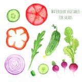 Ręki farby akwareli wektorowi warzywa ustawiający jedzą miejscowego gospodarstwa rolnego rynku nieociosane ilustracje z arugula,  royalty ilustracja