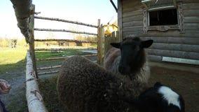 Ręki goście zoo migdalą zwierzęta za ogrodzeniem zbiory wideo