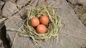 Ręki gromadzenia się jajka gniazdeczko zdjęcie wideo