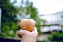Ręki i jabłka ludzie które kochają opiekę zdrowotną Łasowań jabłka w obraz royalty free