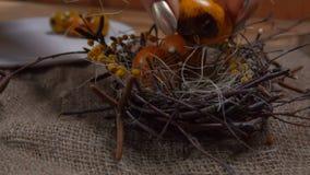 Ręki kładzenia przepiórki jajka w Easter gniazdeczku zbiory wideo