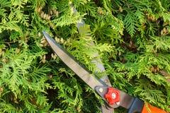 Ręki kobieta używają ogrodnictwa narzędzie żyłować krzaki Zdjęcie Stock