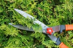 Ręki kobieta używają ogrodnictwa narzędzie żyłować krzaki Obrazy Royalty Free