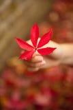 ręki liść czerwień Obrazy Stock