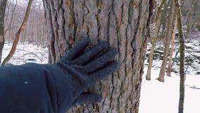 Ręki macania barkentyna zbiory wideo