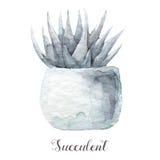 Ręki malować akwarela sukulentu rośliny w garnku Doskonalić dla kart, etykietek, zaproszeń, sieci, scrapbook, ulotki, etc Zdjęcie Royalty Free