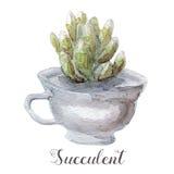 Ręki malować akwarela sukulentu rośliny w garnku Doskonalić dla kart, etykietek, zaproszeń, sieci, scrapbook, ulotki, etc Zdjęcia Royalty Free