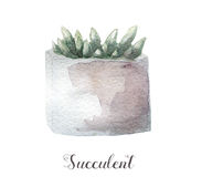 Ręki malować akwarela sukulentu rośliny w garnku Doskonalić dla kart, etykietek, zaproszeń, sieci, scrapbook, ulotki, etc Obraz Stock