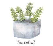 Ręki malować akwarela sukulentu rośliny w garnku Doskonalić dla kart, etykietek, zaproszeń, sieci, scrapbook, ulotki, etc Fotografia Royalty Free