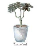 Ręki malować akwarela sukulentu rośliny w garnku Doskonalić dla kart, etykietek, zaproszeń, sieci, scrapbook, ulotki, etc Zdjęcie Stock