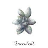 Ręki malować akwarela sukulentu rośliny w garnku Doskonalić dla kart, etykietek, zaproszeń, sieci, scrapbook, ulotki, etc Zdjęcia Stock